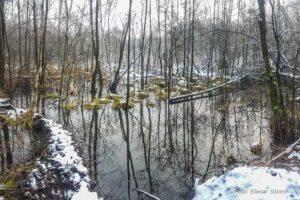 Biberbiotop im Winter